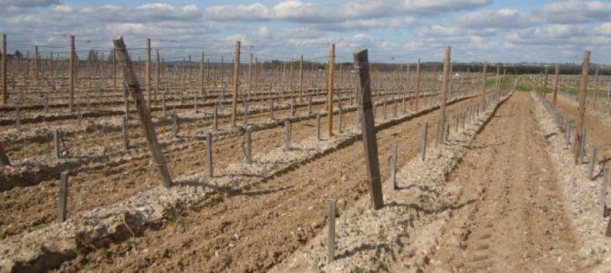 La prolongation des autorisations de plantation de vignes en bonne voie