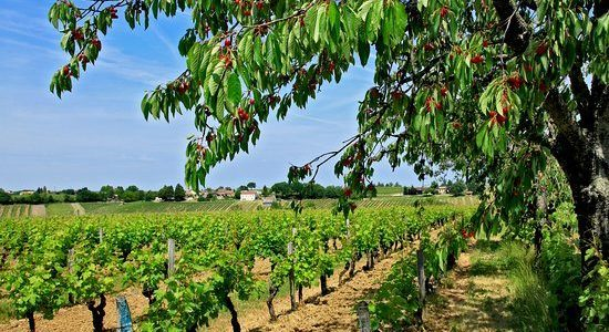 Monbazillac, plantera des arbres fruitiers!