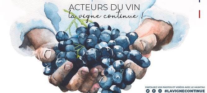 La Vigne continue…