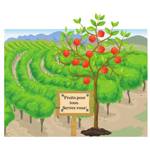 Des arbres fruitiers pour tous dans les vignes de Monbazillac